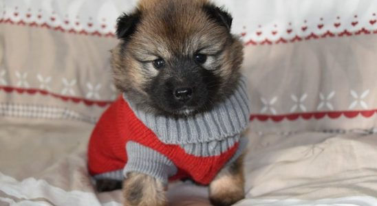 Sweaters for Dogs: How to Choose the Best - Post Thumbnail